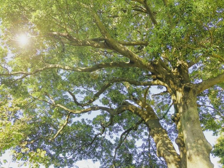 日に当たる木